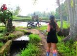 Rice-field run / Corriendo por los arrozales.