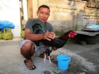 This is Wayan... owns a laundry, rents scooters, sells tourist tours and breeds fighting roosters for fun. / Este es Wayan, tiene una lavandería, agencia de turismo, alquila scooters y cría gallos de pelea como hobby.