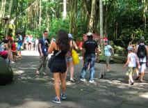 Humans in Monkey Forest, or the other way around? (spot the monkey) / Personas en la jungla de los monos, o lo contrario? (a ver si ubican al mono).