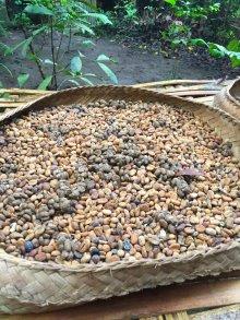 Luwak coffee (still with Luwak poop :) ) // Café Luwak (todavía con un poco de caquita)
