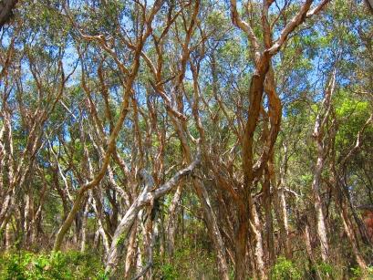 More crazy trees. // Más árboles locos.