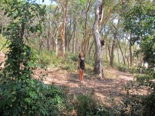 Searching wild Koalas. // Buscando Koalas salvajes.