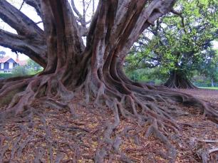 More and more impressive trees. // Más y más árboles impresionantes.