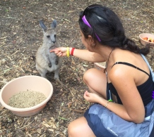 "Baby wallaby (name comes from ""Kangaroo wannabe""). // Bebé ualabí."