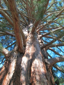 Last tree-picture. // Ultima foto arbórea, prometo.