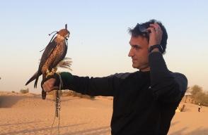 Falcon crest. // Gavilán pollero.