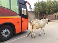Traffic on the way to Agra. // Y nos fuimos para Agra (había tráfico).