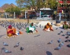 Food for pigeons. // Comida para las palomas.