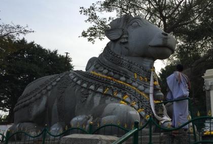 Giant Nandi, god Shiva's bull. // Nandi gigante, el buey del dios Shiva.