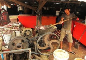 And the leftovers?... let's just grind them for the cattle. // Y las sobras? A molerlas, para alimentar al ganado.