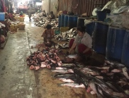 HACCP salubrity standards at the fish market. // Cumpliendo todas las normas sanitarias en el mercado de pescado.