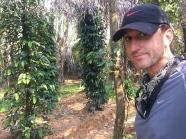 Pepper plants. // Pimienta!
