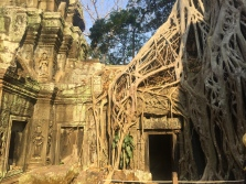 And this is Ta Prohm, where Lara Croft was shot. // Templo de Ta Prohm, donde se filmó Lara Croft.
