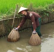 FIshing with baskets and hands. // Pescando con canastas y con las manos.