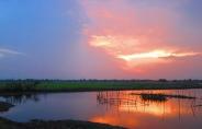 Sunset across the rice fields. // Puesta del sol en los campos de arroz.