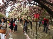 First glimpse of a crowded sakura in Osaka. // Primeros atisbos del famoso sakura, con bastante gente, en Osaka.