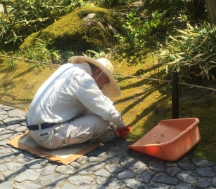 Guess what tool this gardener is using? // Adividen qué herramienta está usando este jardinero?