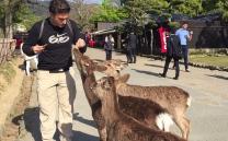 Feeding bambi. // Alimentando a Bambi.