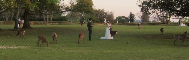 Popular spot for wedding pictures, it seems. // Parque de Nara, popular para fotos con la novia.